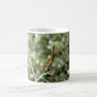 Mayfly resting on a twig coffee mug