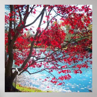 Maymont Gardens Red Maple Tree Virginia Poster Art