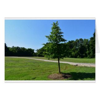 McAlpine Creek Park, North Carolina, Greeting Card
