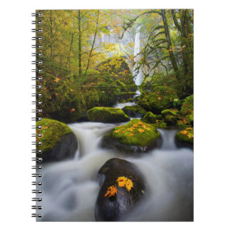McCord Creek Bigleaf Maple | Columbia Gorge, OR Notebook