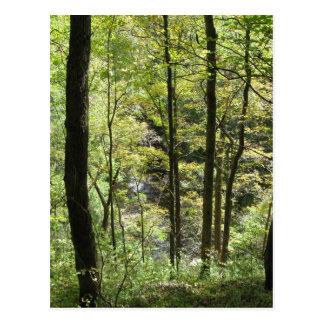 McCormick's Creek Postcard