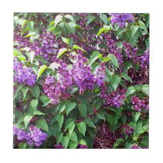 MClairArt's PhotosNArt Spring Flowers Ceramic Tile