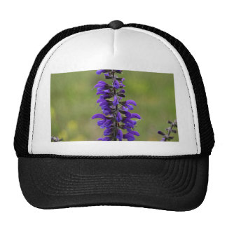 Meadow clary or meadow sage cap