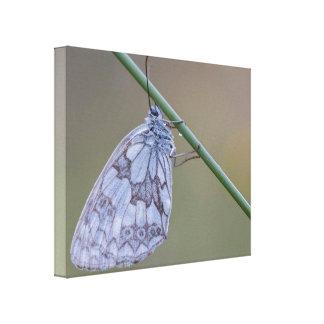 Meadow Dreams Butterfly Print Canvas Macro Canvas Print
