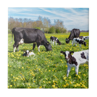 Meadow full of dandelions with grazing cows small square tile