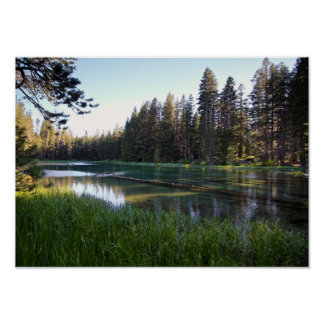 Meadow Lake, Pine Tree Forest Poster