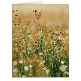 Meadow Morning Dew Card
