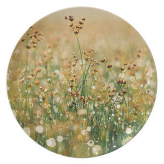 Meadow Morning Dew Plates