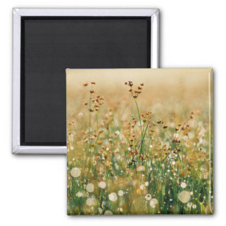 Meadow Morning Dew Square Magnet