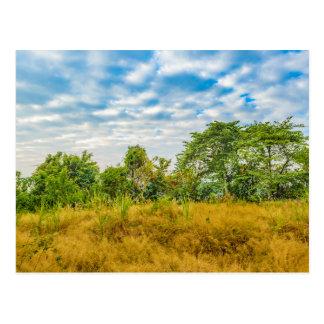 Meadow Tropical Landscape Scene, Guayaquil Postcard