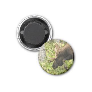 Meandering Moose 3 Cm Round Magnet