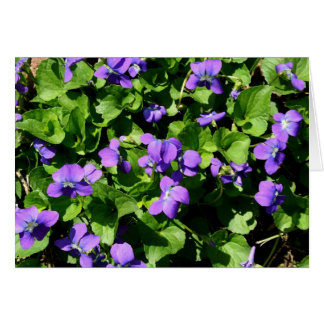 Meaning of Violets note cards