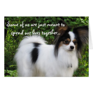 Meant to Be Happy Birthday papillon card