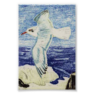 Mediterranean Gull Print
