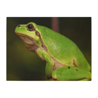 Mediterranean tree frog wood print