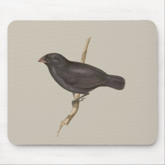 Medium Ground Finch Mouse Pad