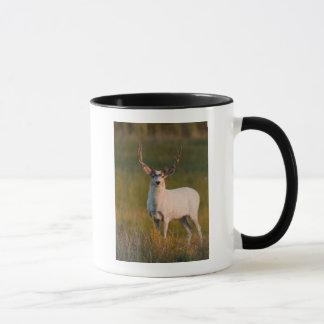 Meeker's White Buck 2 Mug