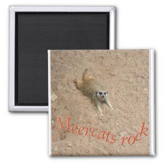 Meercats rock ! magnet