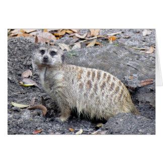 Meerkat (1043) Greeting Card