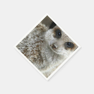 meerkat-16.jpg disposable napkins