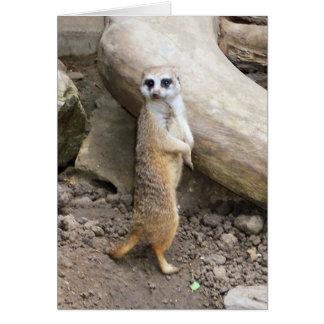 Meerkat #1 card