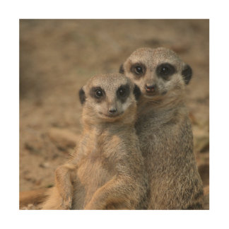 Meerkat_20170901_by_JAMFoto Wood Wall Art