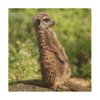 Meerkat_20171001_by_JAMFoto Wood Wall Art