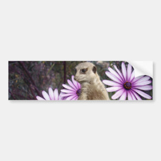 Meerkat And Purple Daisies, Bumper Sticker