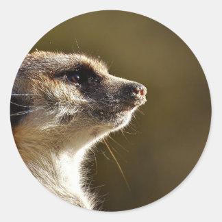 Meerkat Animal Nature Zoo Tiergarten Small Fur Classic Round Sticker
