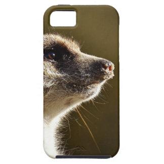 Meerkat Animal Nature Zoo Tiergarten Small Fur iPhone 5 Cases