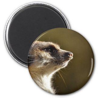 Meerkat Animal Nature Zoo Tiergarten Small Fur Magnet