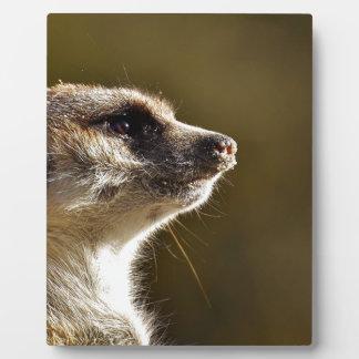 Meerkat Animal Nature Zoo Tiergarten Small Fur Plaque