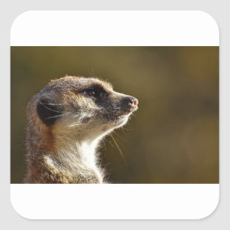Meerkat Animal Nature Zoo Tiergarten Small Fur Square Sticker
