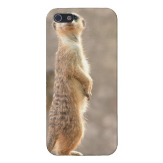 Meerkat at Attention iPhone 5/5S Covers