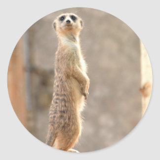 Meerkat at Attention Stickers