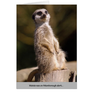 Meerkat Attenborough Alert Card