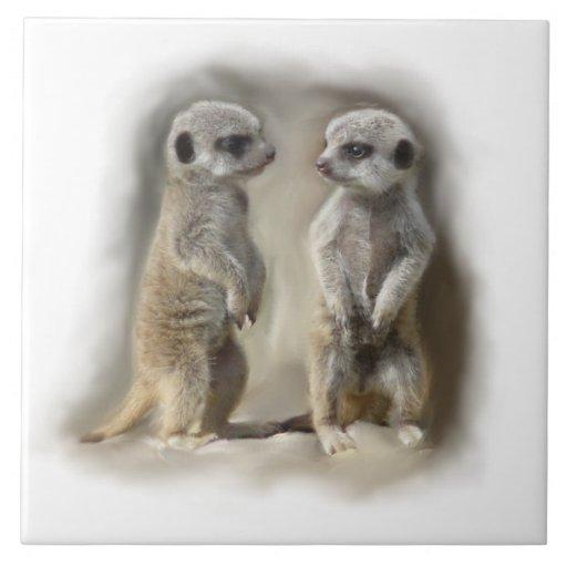 meerkat babies ceramic tiles
