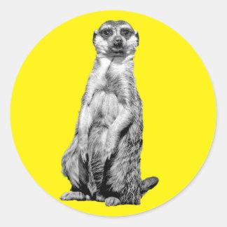 Meerkat Custom Background Color Round Sticker
