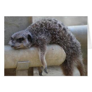 Meerkat Down Card