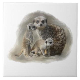 meerkat family tile