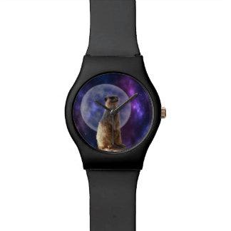 Meerkat In The Moonlight, Ladies May Watch. Watch