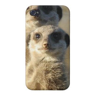 Meerkat iPhone 4/4S Cases