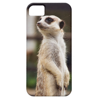 Meerkat iPhone Case