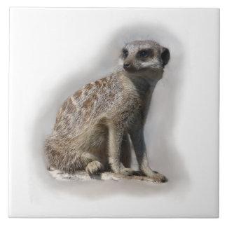 meerkat large square tile