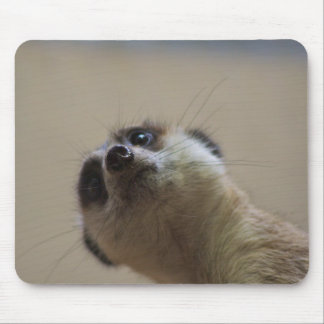 Meerkat Looking Dramatic Mouse Pad