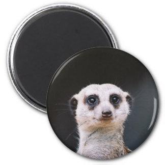Meerkat Lookout Magnet