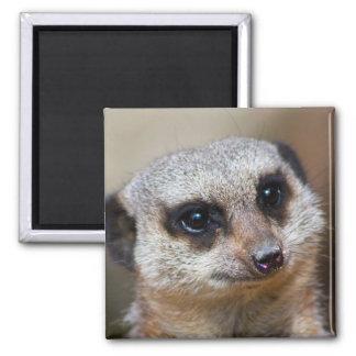 Meerkat Magnet