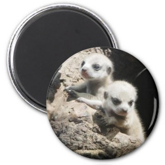 meerkat magnet 3