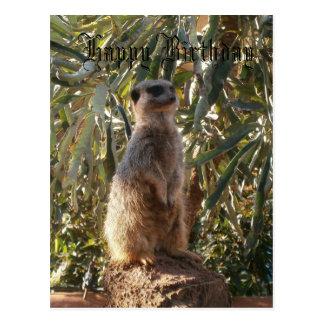 Meerkat On Guard Duty, Happy Birthday Postcard