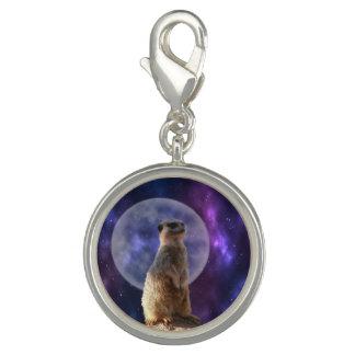 Meerkat On Night Watch, Charm